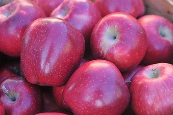November Gardening Calendar - Fruits