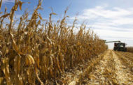 Corn Yield and Soybean Production Up in 2017, USDA Reports