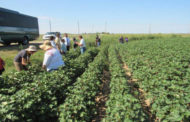 Western Kansas tour educates EPA employees on dryland agriculture and herbicide-resistant weeds