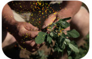 Growing Organic: Weed Management