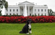Should The White House Have A Dog?