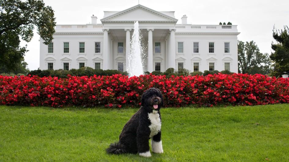 Should The White House Have A Dog Rural Messenger