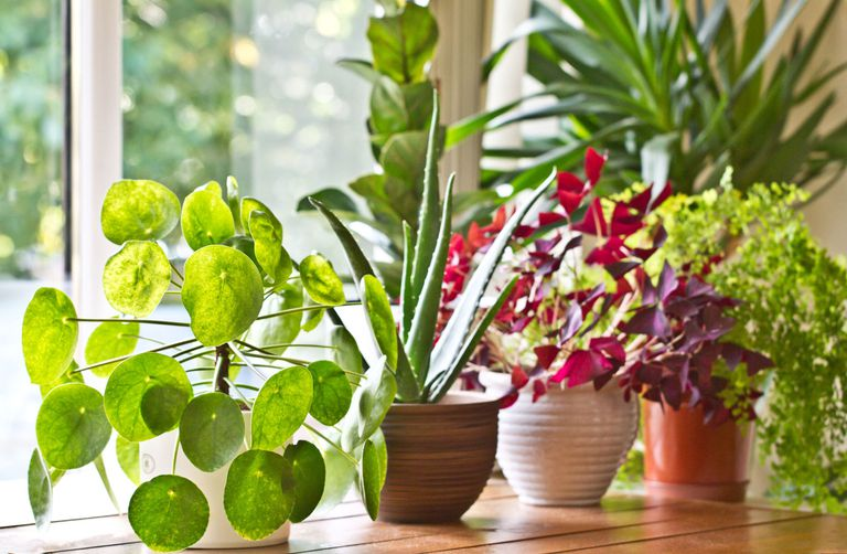 Moving Houseplants Inside for the Winter