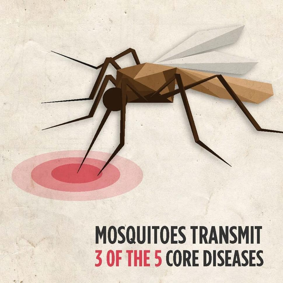 High Mosquito Populations Cause For Disease Awareness Of Horse Owners