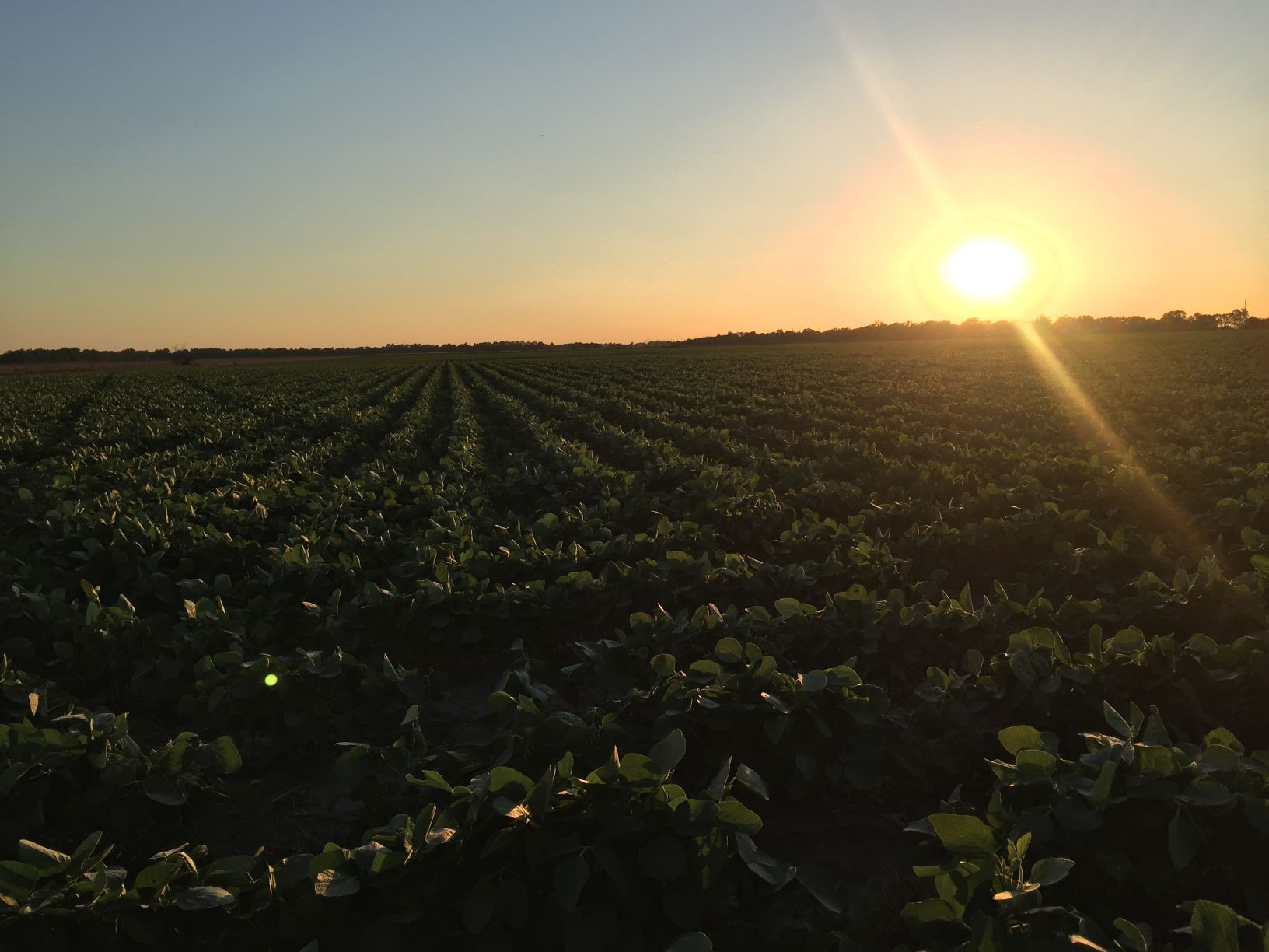 2018 Soybean Crop is Looking to Break Records