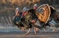 Westar Energy Invites Youth To Turkey Hunt