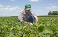 Without Adequate Crop Scouting, Pests Like Hungry Caterpillars Can Eat Through Farmers' Profits