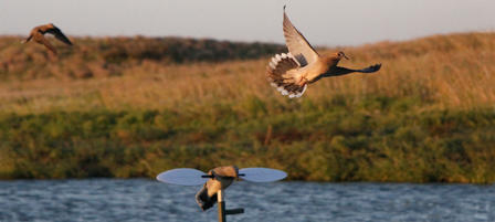 KDWPT-managed Dove Fields Make Ideal Hunting Spots