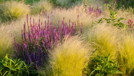 Ornamental Grasses: Advice from a Minnesota Collection